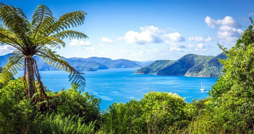 Queen Charlotte Sound is an eco-marine haven, where seals, dolphins, penguins and gannets abound