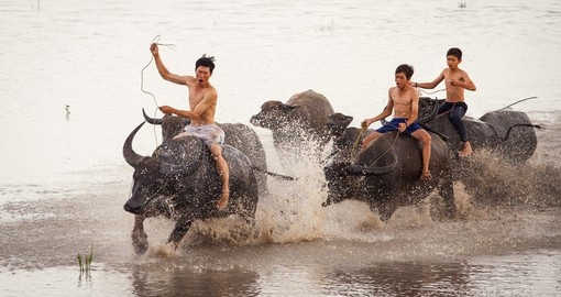 Water Buffalo riding