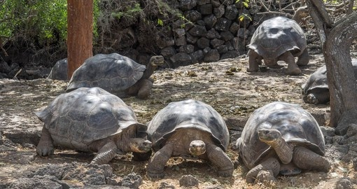 Make friends with giant tortoises on your Galapagos Tour