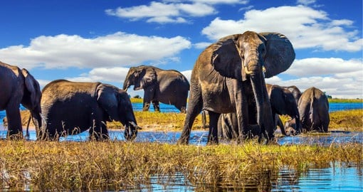 Experience the best of a Botswana safari