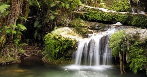 A rainforest waterfall