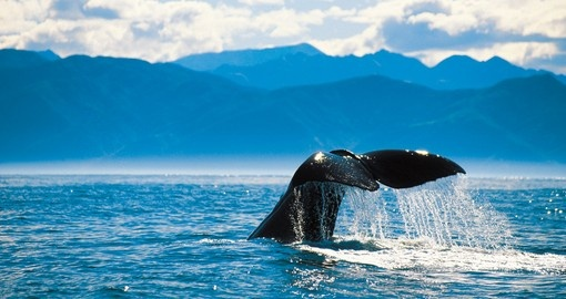 Go whale watching in Kaikoura