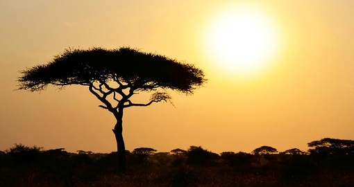The rising sun in Serengeti