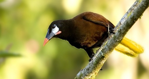 Go bird watching on your  Costa Rica vacation
