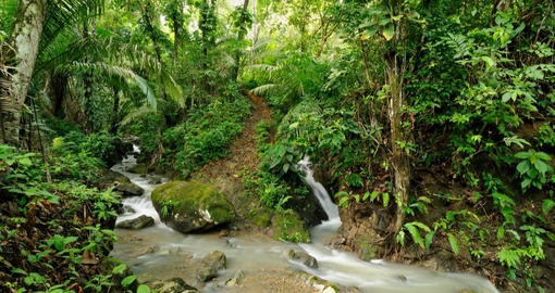 Experience amazing Darien Jungle on your next trip to Panama.