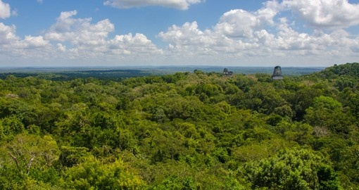 View over the rainforest from a ruin in Tikal