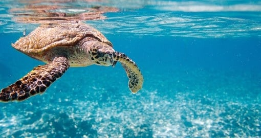 Spot a sea turtle while snorkeling during your next trip to Seychelles.