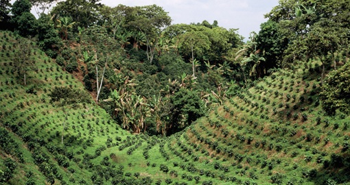 Discover lush Coffee Plantations on your trip to Colombia