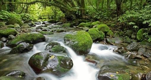 Relax in lush setting along some of New Zealands walking track
