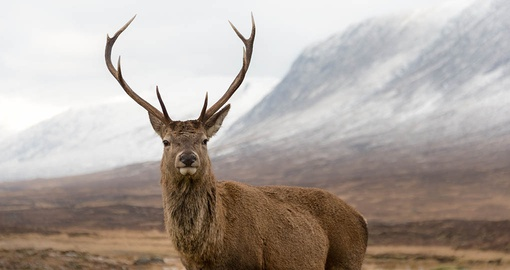Get to know Scottish wildlife on your Scotland vacation