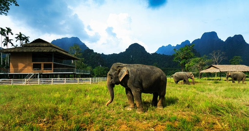 Hangout with elephants on your Thailand tour