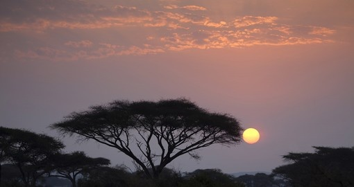 Acacia tree in Amboseli National Park