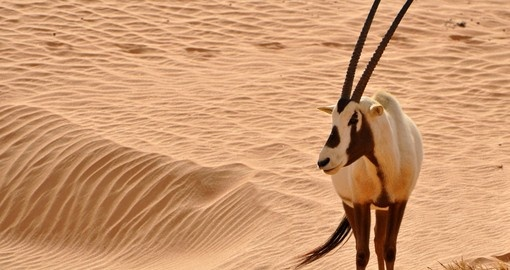 Visit desert areas on your Dubai vacation package