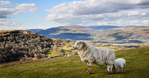 Explore the farmlands of the Welsh countryside on your Trip to Wales