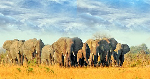 Hwange National Park is home to large herds of elephant
