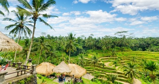 Rice terrace on Bali Island