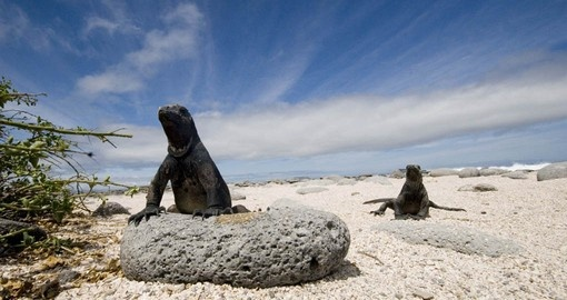 Your Ecuador vacation features the Galapagos Islands.