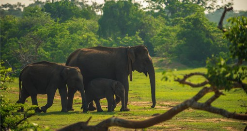 You can expect to see all different kinds of wildlife in the jungles of Yala National Park on your Sri Lanka Vacations