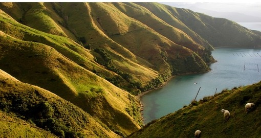 The green slopes of the Marlborough Sounds region