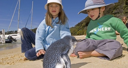 Experience New Zealand's Wildlife Interaction during your next trip to New Zealand.