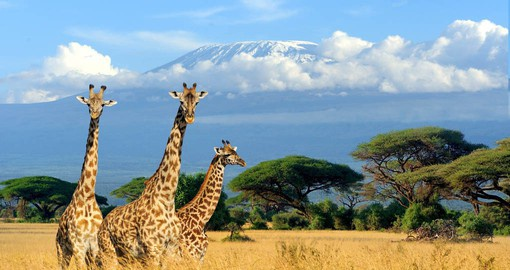Iconic Kilimanjaro is the focal point of your Tanzania vacation