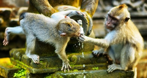 Monkeys drinking water from a stone temple