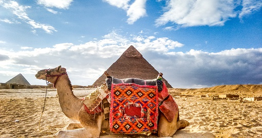 Experience a camel ride in Cairo
