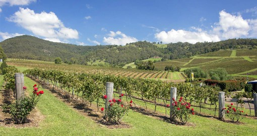 Enjoy a wide array of exceptional wines in the Hunter Valley