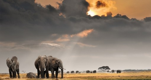 Sighing the majestic African Elephant is just one of the thrills of travelling to Kenya