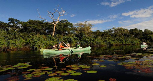 Brazil's Pantanal is the world's largest wetland covering 210,000 sq km