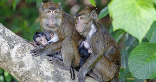 Philippines Nature And Wildlife Goway Travel