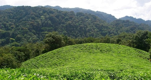 Explore Tea Plantations sites and enjoy natures beauty on your next trip to Rwanda.