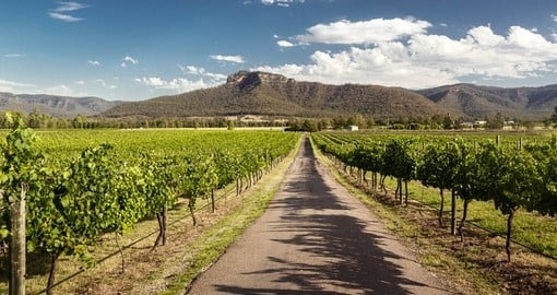 Visit the vineyards of the Hunter Valley on your Australia Vacation