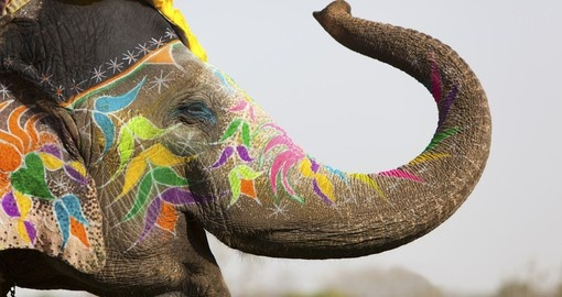 An elephant decorated for a festival in Jaipur