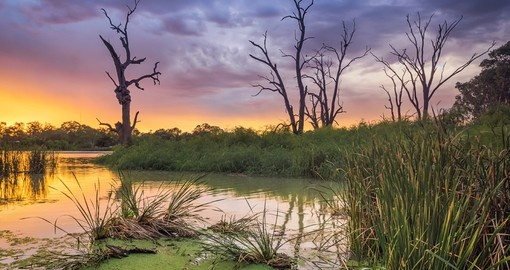 Experience sunset on the Murray River during your next Australia vacations.
