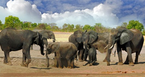 The elephants of Hwange are world famous and the Park's elephant population is one of the largest in the world