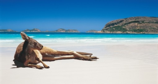 Kangaroo on Lucky Bay Beach