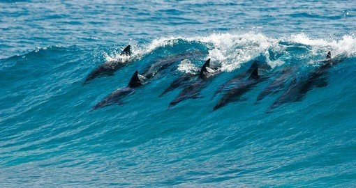 A pod of dolphins catch a wave and surf it in Mozambique