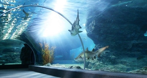 Visit Aquarium and experience the magic on your next Australia vacations.