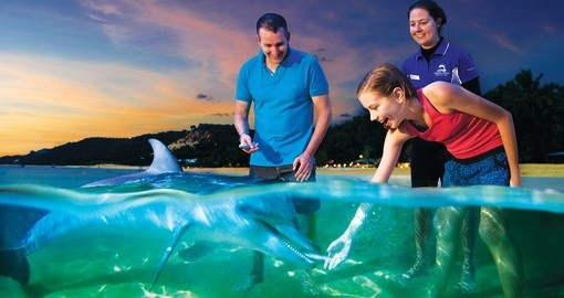 On your Australia Vacation get up close and personal with dolphins and other marine wildlife located around Moreton Island.