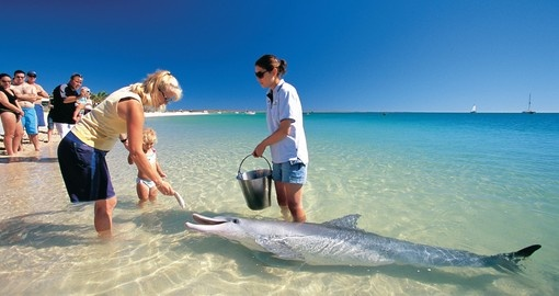 You will be able to see Bottlenose Dolphin during your next Australia vacations.