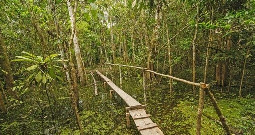 HIke through some jungle on your trip to the Amazon