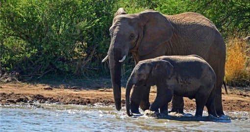 Elephants at a water hole in Pilanesberg National Park