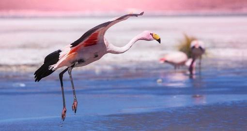 Bolivia Nature And Wildlife Goway Travel