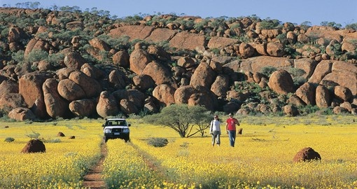 Walk amongst the Western Australia wildflowers