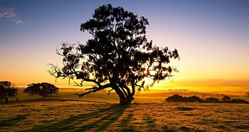 Sun rise over the Clare Valley - a great experience to be included on Australia vacations.