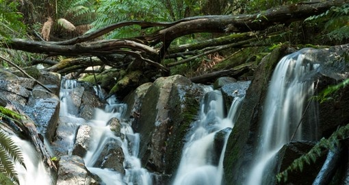 Discover Waterfall in the Blue Dandenong Ranges during your next Australia tours.