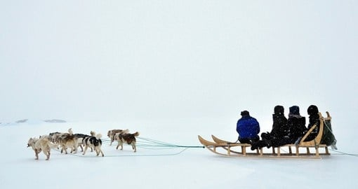 Dog sledging trip in the winter