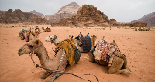 Experience the Arabian Desert at Wadi Rum