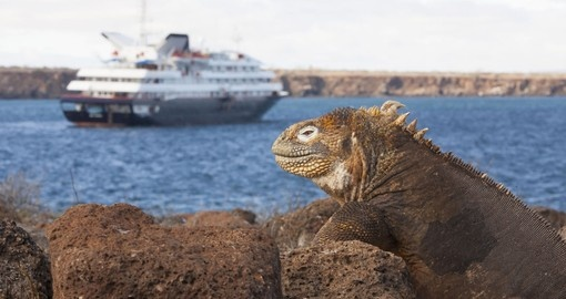 Iguana gazes wistfully at the magnificent Silversea